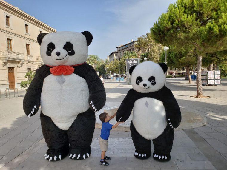 Solomon liked these Pandas