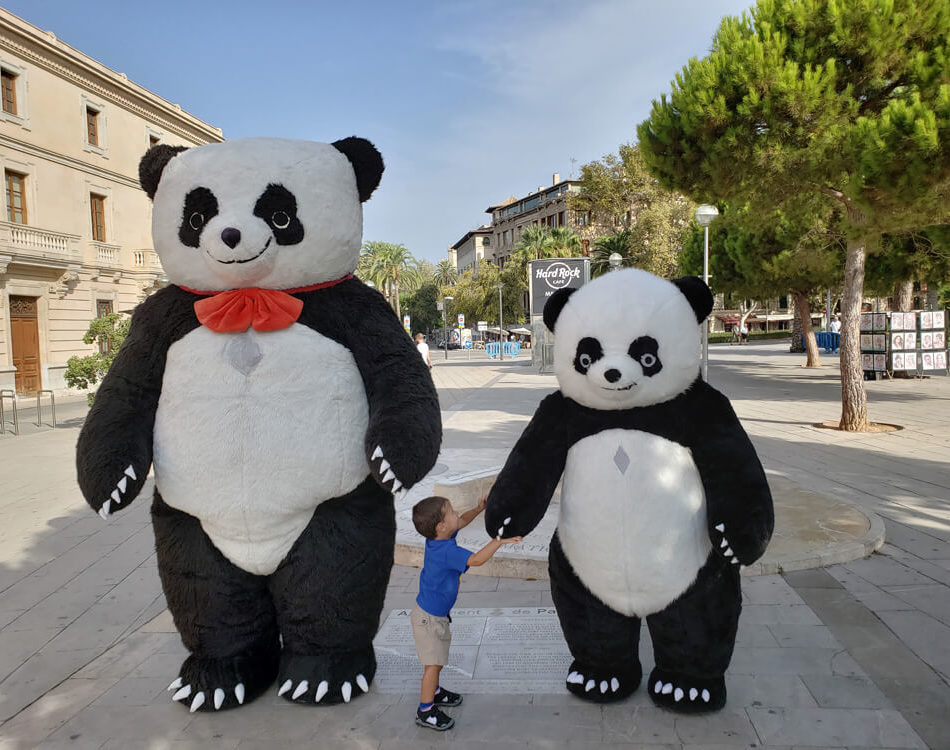 Solomon liked these Pandas