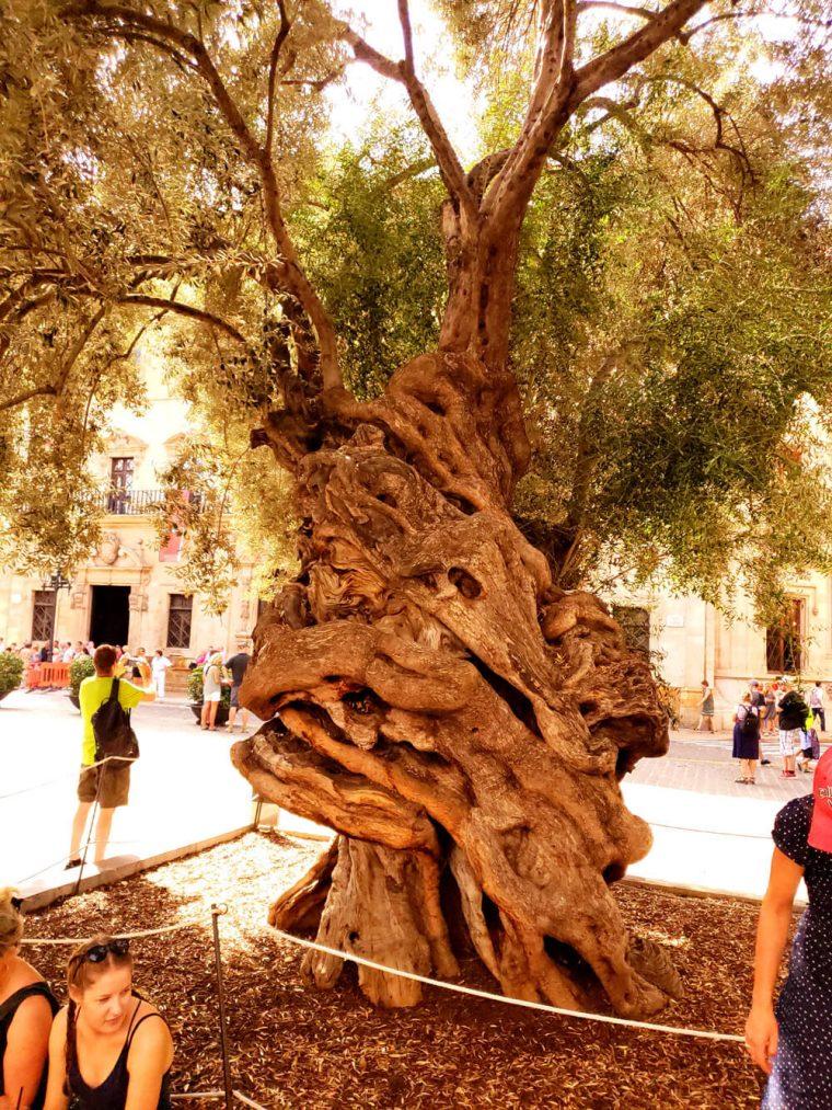 Super duper old tree