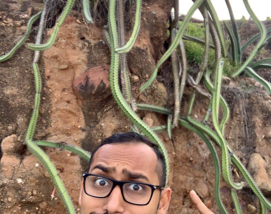 Crazy Cactus in Punta Mita
